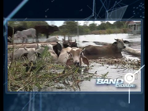 Cheia em Anamã: produção de gado perdida e serviços paralisados