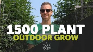Gary Tours 1,500 Plant Outdoor Grow - Leap Farms // 420 by 420 Science Club