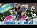 REACCIÓN: Le regalo a mi PERRO una ALBERCA DE HIELOS!!