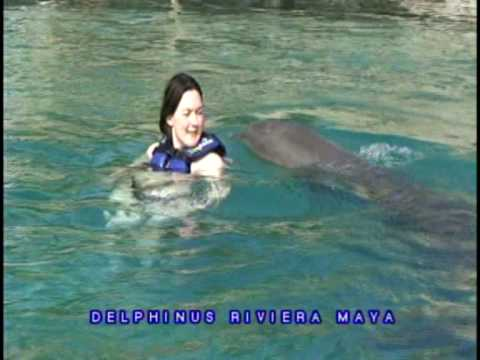 Kingu es a delfinek