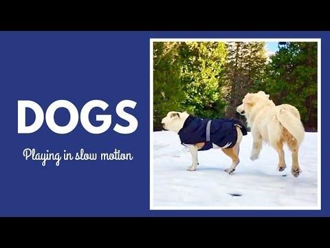 Perros en cámara lenta