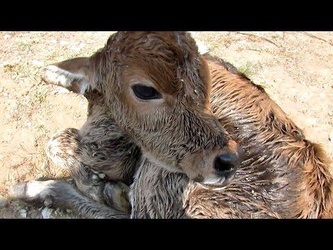 這隻生物剛從母親子宮出來「就被遺棄在路邊自生自滅」,更嚇人的真相是…受害的不只一隻!