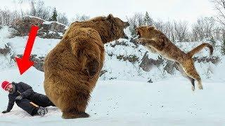 Video Wild Animals That SAVED Human Lives! MP3, 3GP, MP4, WEBM, AVI, FLV Agustus 2019