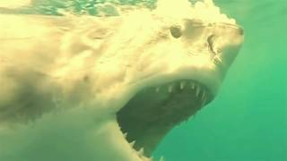 Video Top 10 Mysteries of the Ocean Makes You Amazed MP3, 3GP, MP4, WEBM, AVI, FLV April 2017