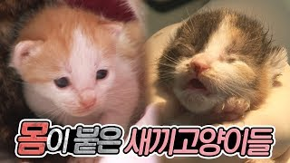 Video Four kittens which their bodies are all stuck together MP3, 3GP, MP4, WEBM, AVI, FLV Juni 2018