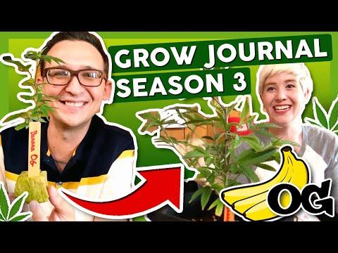 BANANA OG OR BUST! 🍌Grow Journal: Season 3