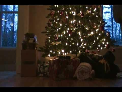 Chihuahua Christmas 2009