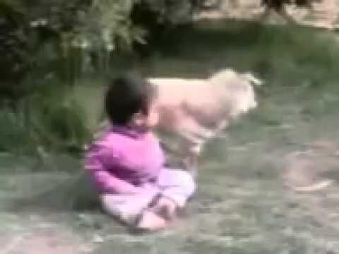 سكس بنات مع حيوانات