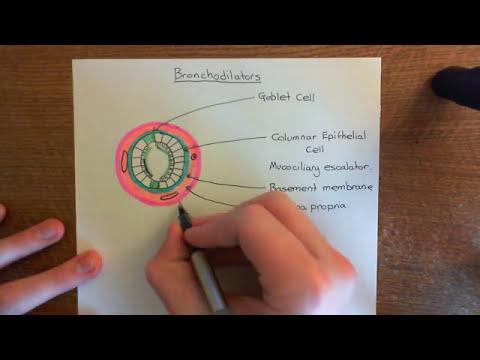 The Bronchodilators to treat Asthma Part 1