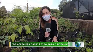 Série Meio Ambiente: Jardim Botânico promove reflorestamento em áreas de cerrado