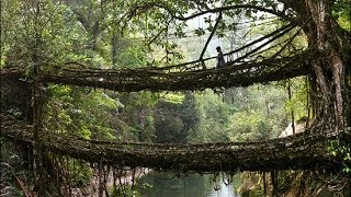 Cherrapunji India  city photo : Living Root bridges of Cherrapunji, India HD 2014 HD