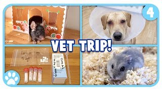Vlogstice Day 4: Going To The Vet, Mouse Playtime + Mini Q&A! by ErinsAnimals