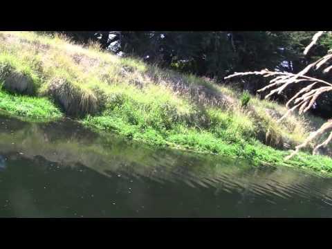 Small stream stalking..2017_Horgászat videók