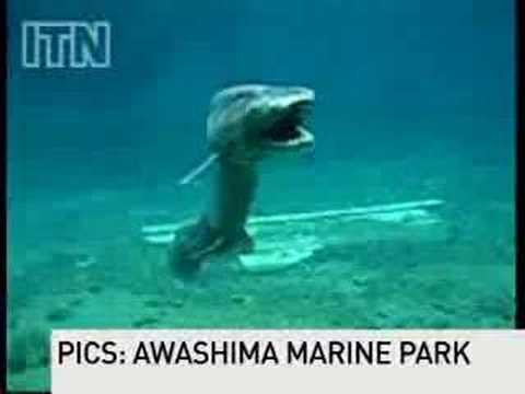Living Dinosaur Shark Found in Japan picture