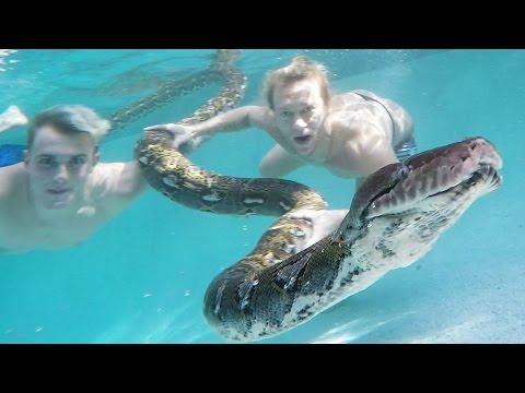 un serpente gigante nuota con 2 ragazzi in piscina!