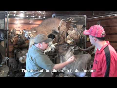 Taxidermy Maintenance Tips