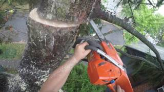 Video Arborists At Work (Cutting Edge Tree Professionals V Massive Norway Spruce) Part 2 MP3, 3GP, MP4, WEBM, AVI, FLV Desember 2017