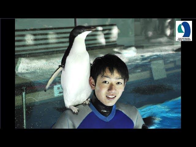 【名古屋港水族館】肩乗りペンギン~掃除していると勝手に乗ってきます