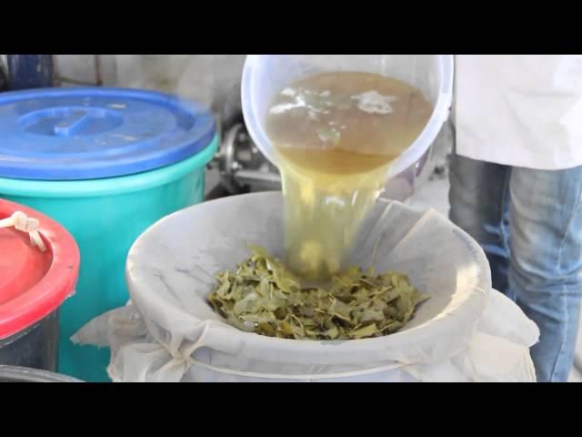 चाय से कैटेकिन (catechin) उत्पादन की तकनीक