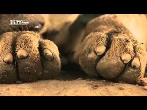 Visage d'Afrique : les hommes hyènes