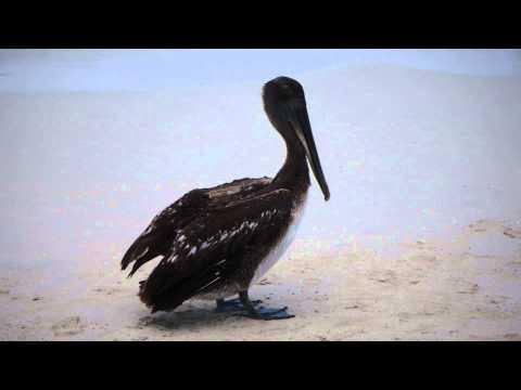 crane bird posing  at the beach of Hotel Melia Varadero - Cuba