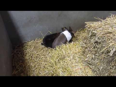groepskoppeling van 3 konijnen