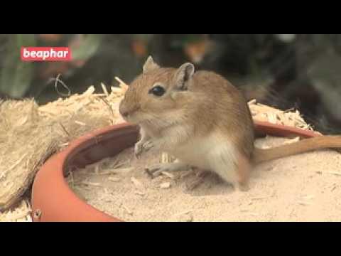 Beaphar XtraVital Badesand für Gerbils & Chinchillas