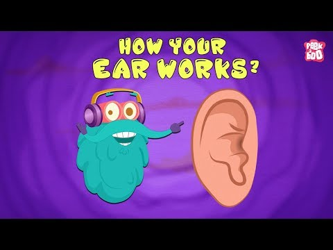 How Your Ear Works? - The Dr. Binocs Show | Best Learning Videos For Kids | Peekaboo Kidz
