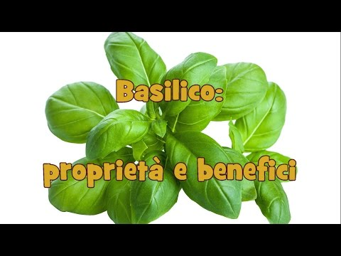 basilico: proprietà e benefici.