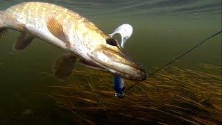 Pike Fishing With Lures: Soft-bait&Lip Scull + Dead Bait.Рыбалка: щука на силикон и мертвую рыбу.