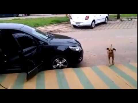 毛小孩靠近音樂開超大聲的車子後,牠立馬展現出讓大家嘴角上揚40秒的才華!
