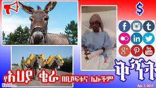 የአህያ ቄራ በቢሾፍቱና ሌሎችም - Donkey Slaughter House in Ethiopia - DW