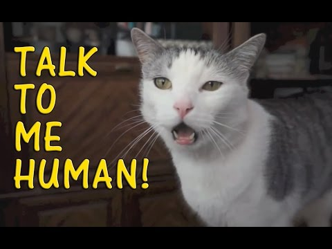 Cats Talking With Their Humans Compilation 2015 [NEW]