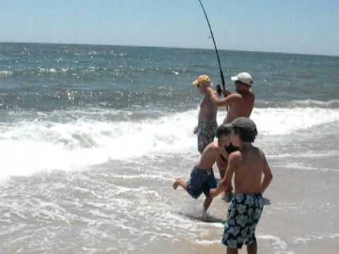 Big Blue Fish from Fire Island Beach, NY – July 2010