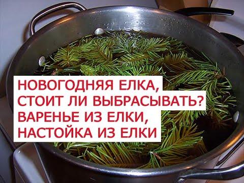 Новогодняя елка, стоит ли выбрасывать варенье из елки, настойка на водке из елки, чай из хвои, сок и