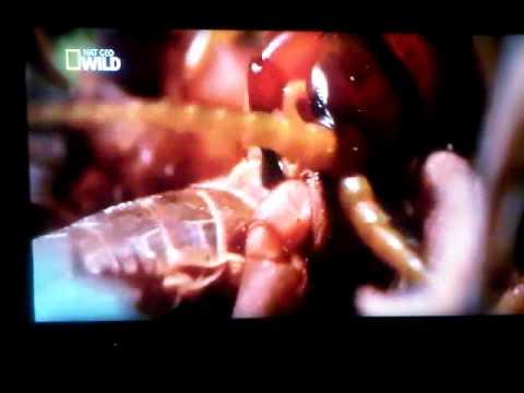 canales en HD con deco AZBOX BRAVISSIMO, en satellite amazonas con IKS