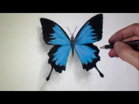 comment colorier un papillon