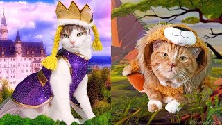 Video Dressing up my Cats in Holoween Costumes MP3, 3GP, MP4, WEBM, AVI, FLV Desember 2017