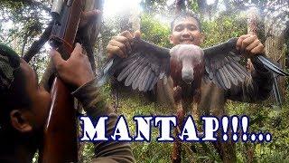 Berburu Burung Terkukur ( Pombo Abu/Mata Merah) di Pedalaman Papua,,, Mantap!!...