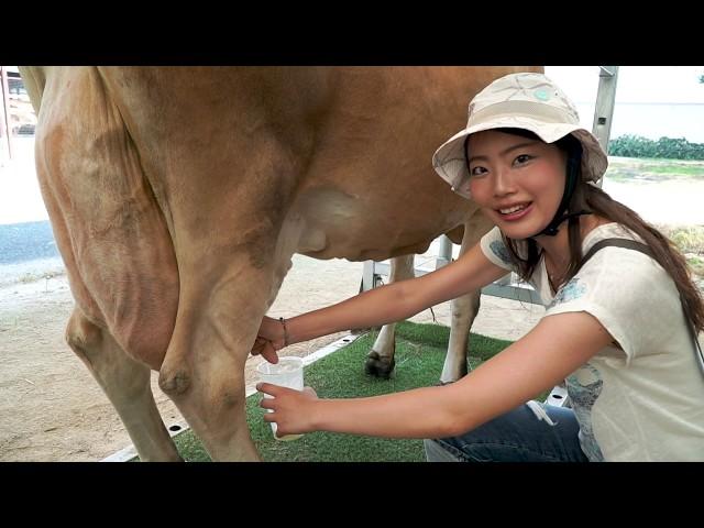 蒜山高原ジャージー牛の乳しぼり&アイスクリーム作り体験