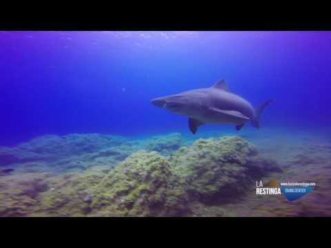 Tiburón Solrayo en la isla de El Hierro con Buceo la Restinga (31/07/16)