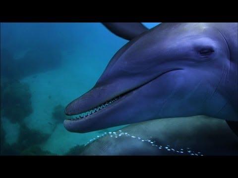 這隻河豚在海裡散步卻慘被屁孩海豚「撞飛」,出車禍的經典表情害大家都笑倒在螢幕前啊!(有車禍現場影片)