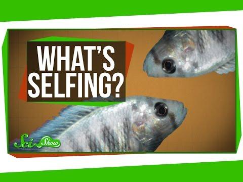 What is Selfing