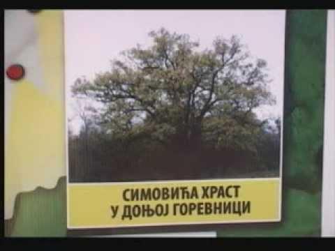 """Предавање """"Стабла Чачка"""" Душана Ивановића"""