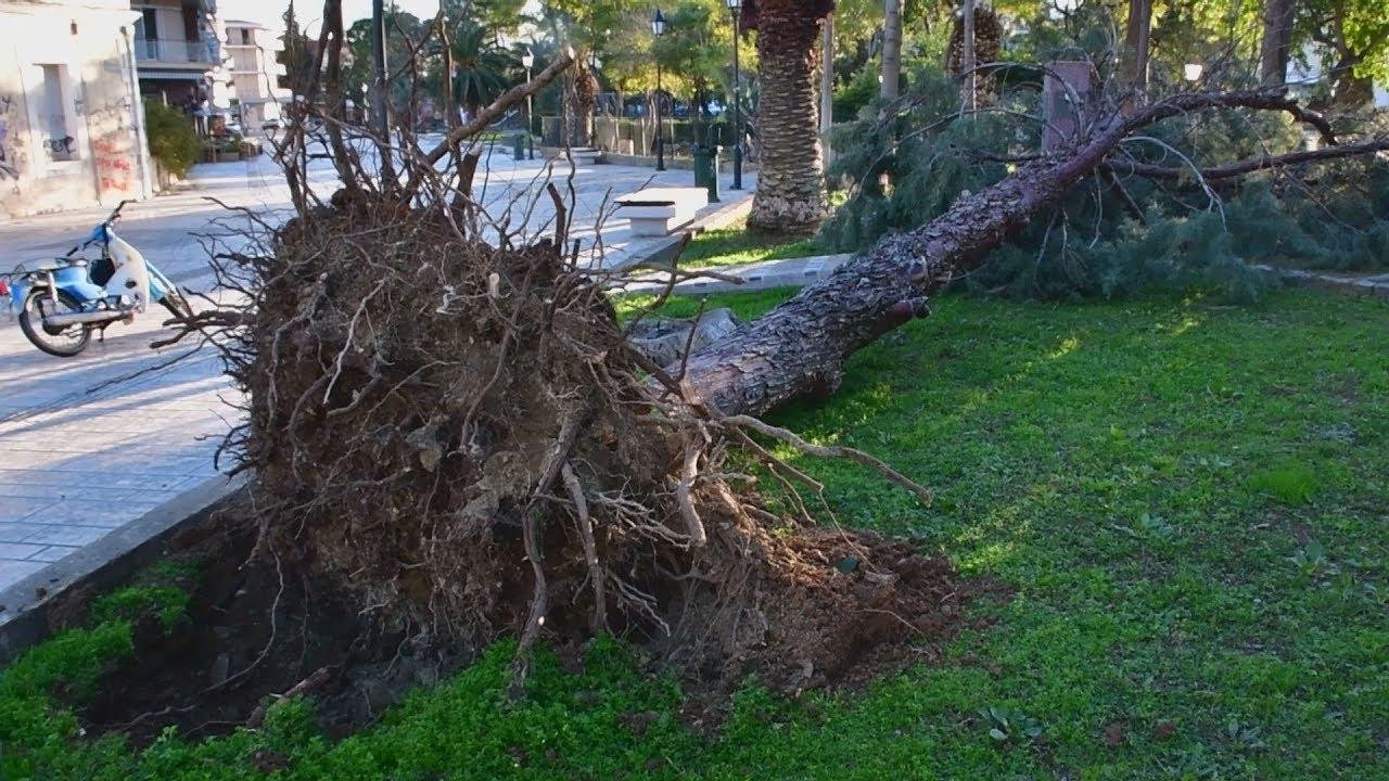 Η επόμενη μέρα από τις καταστροφές στην Αργολίδα από τους θυελλώδεις ανέμους