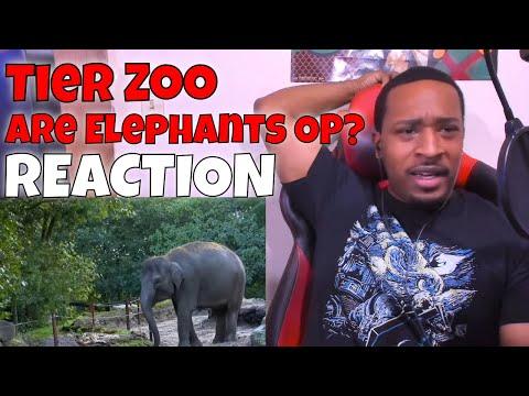 Tier Zoo - Are Elephants OP? REACTION   DaVinci REACTS