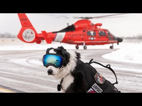 """""""Piper"""" the Aviation Dog recently lost his battle with cancer. This is his story"""