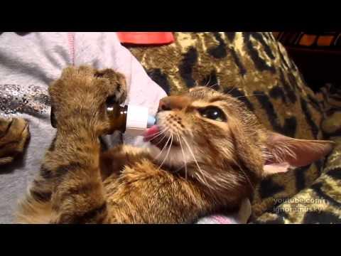 爆可愛小貓學小BABY吃東西