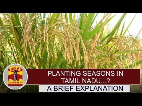 Planting-Seasons-in-Tamil-Nadu--A-Brief-Explanation-Thanthi-TV