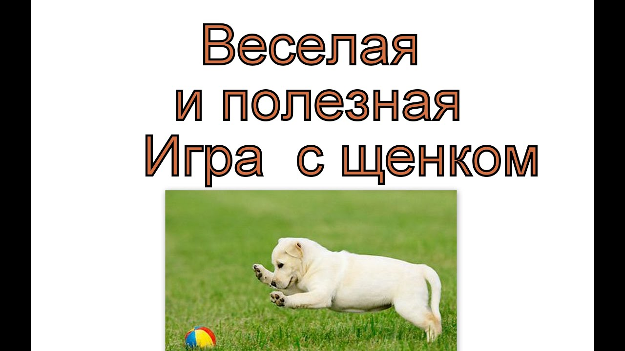 Смотреть онлайн: Дрессировка щенка  — Интересная игра  для щенка
